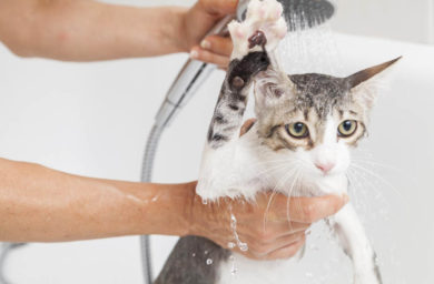 Видео как правильно мыть кота