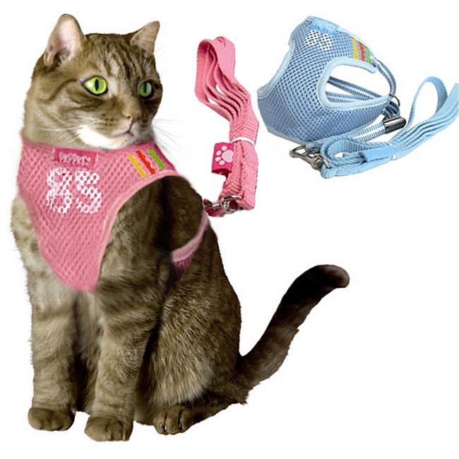 Как правильно одеть шлейку на кошку