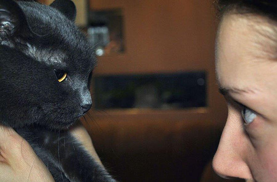Как прекратить драку кошек