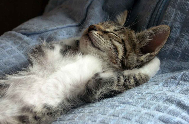 С первых дней и на всю жизнь: видео, как приручить котёнка к рукам