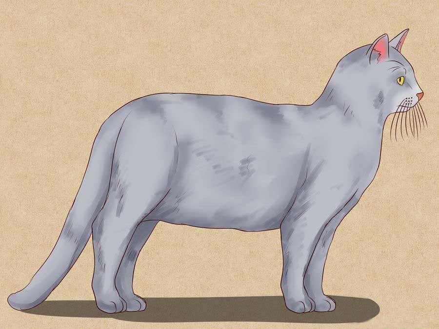 Как просто нарисовать кошку