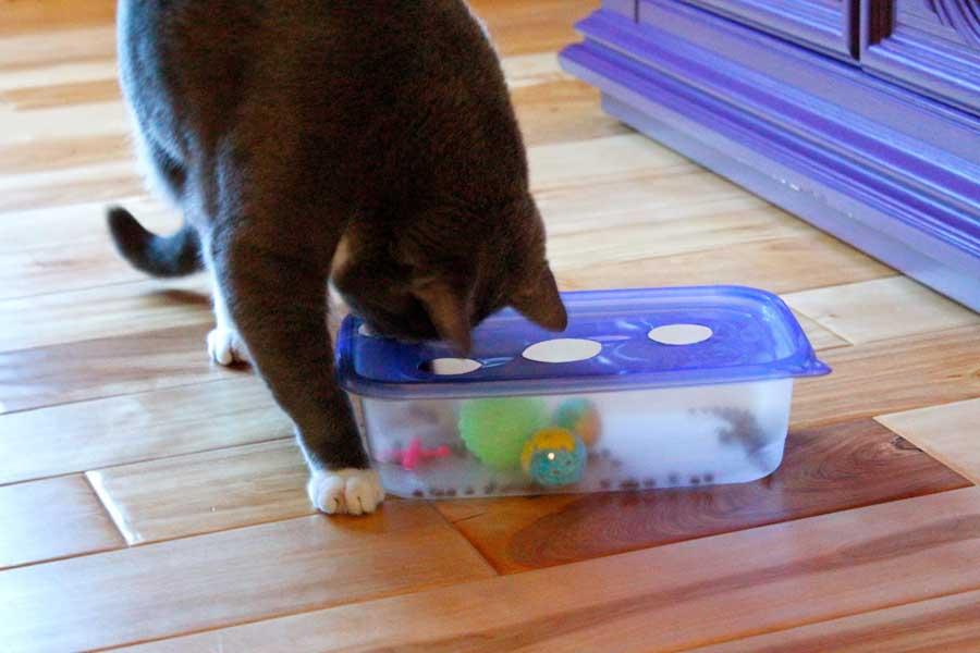 Как сделать игрушку для кота в домашних условиях