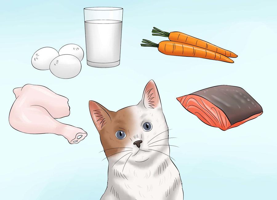 Как сделать шерсть кошки блестящей