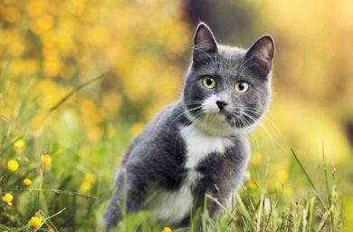 Как собрать кошку на дачу