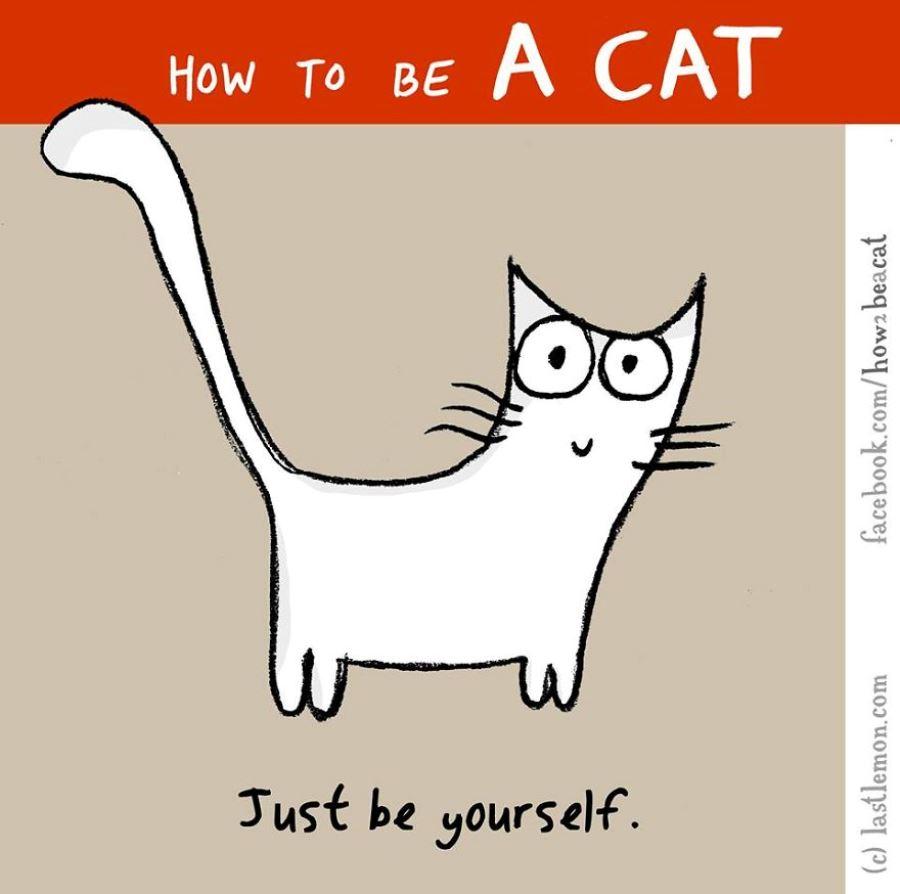 Как стать кошкой в реальной жизни