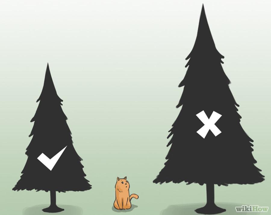 Как уберечь елку от кошки