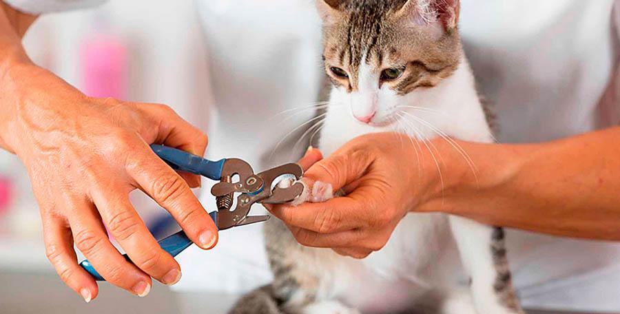 Стрижка когтей у кошек чем