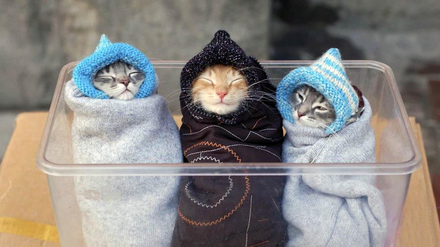 Как ухаживать за котятами без кошки