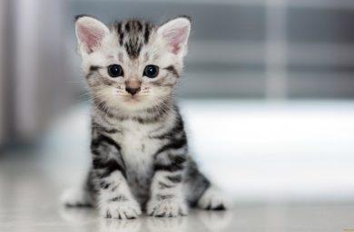 Как ухаживать за месячным котенком без кошки
