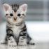 Уход за месячным котёнком без кошки