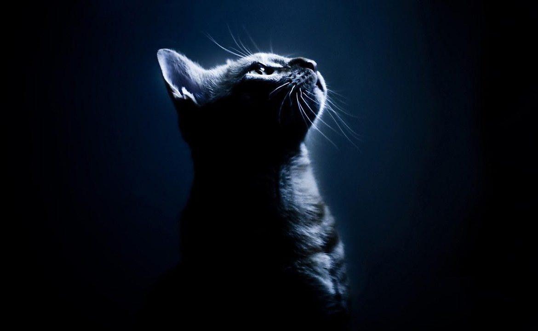 Ночью коты все видят