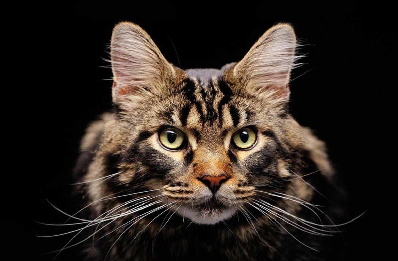 Взгляд на мир глазами кошки: как видят коты?