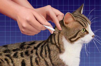 Какие бывают средства от блох для кошек