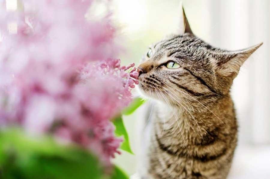 Какие запахи любят кошки