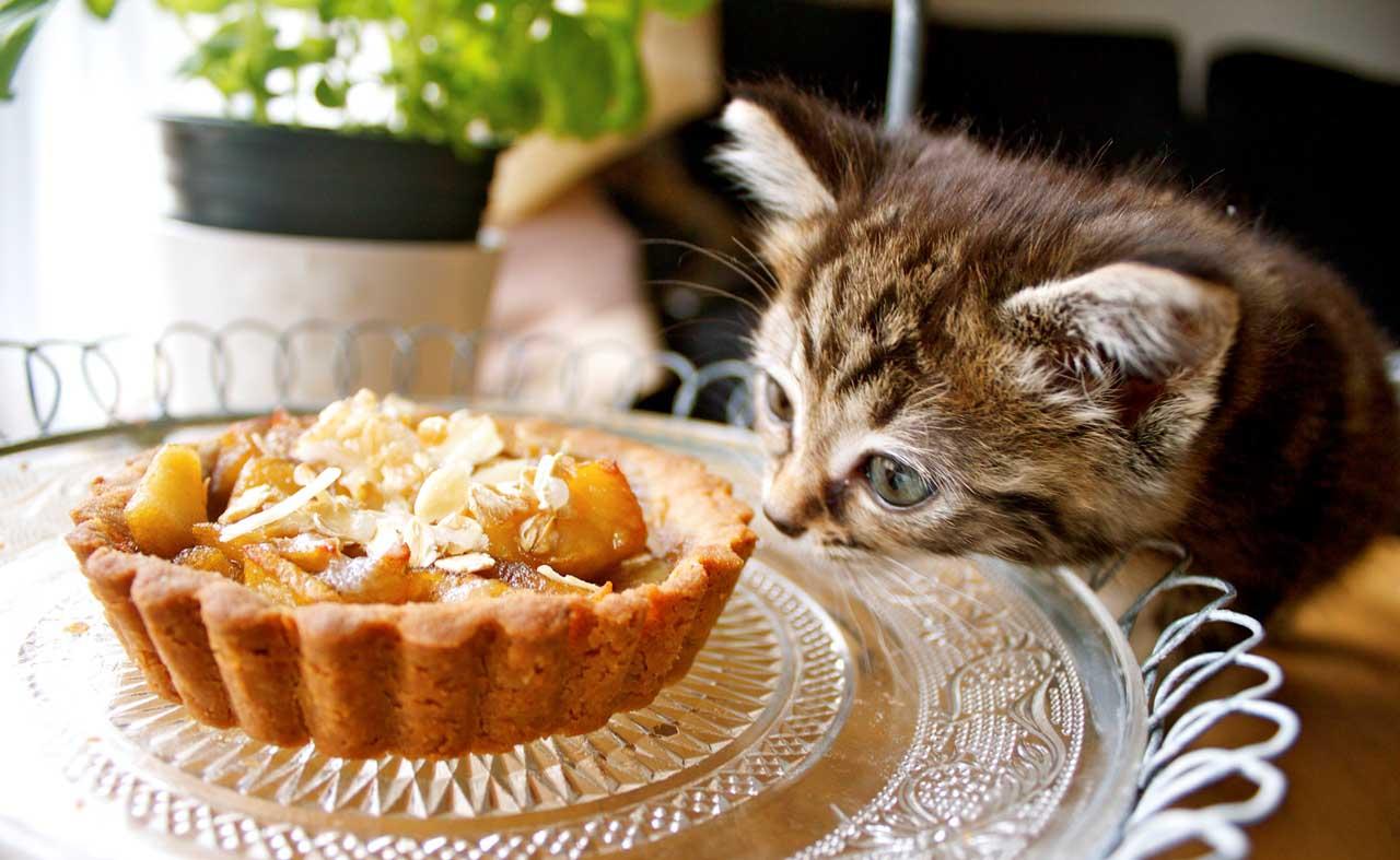 Какой вкус не чувствуют котята