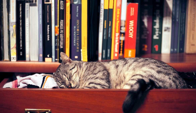 Калифорнийская сияющая кошка: фото голливудской красотки