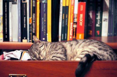 Калифорнийская кошка: фото