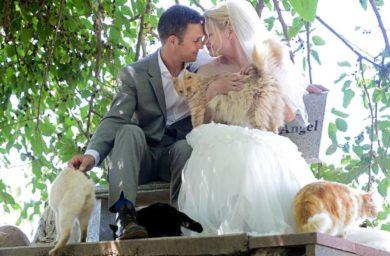 Канадская пара пригласила на свадьбу тысячу котов