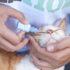 Капли для кошек от гноя в глазах: обзор средств
