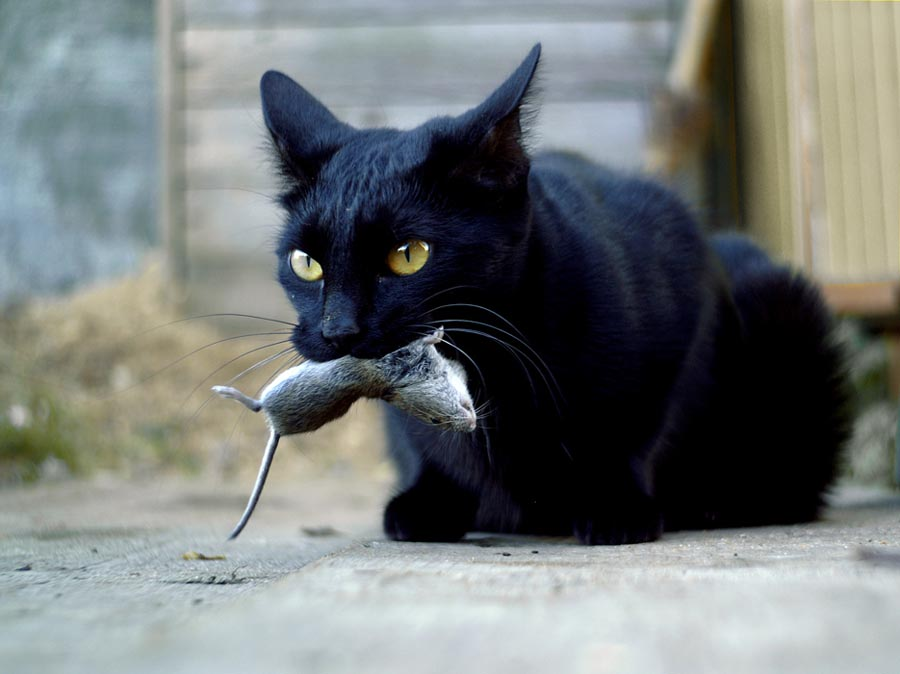 Смешные картинки 8 марта с котами
