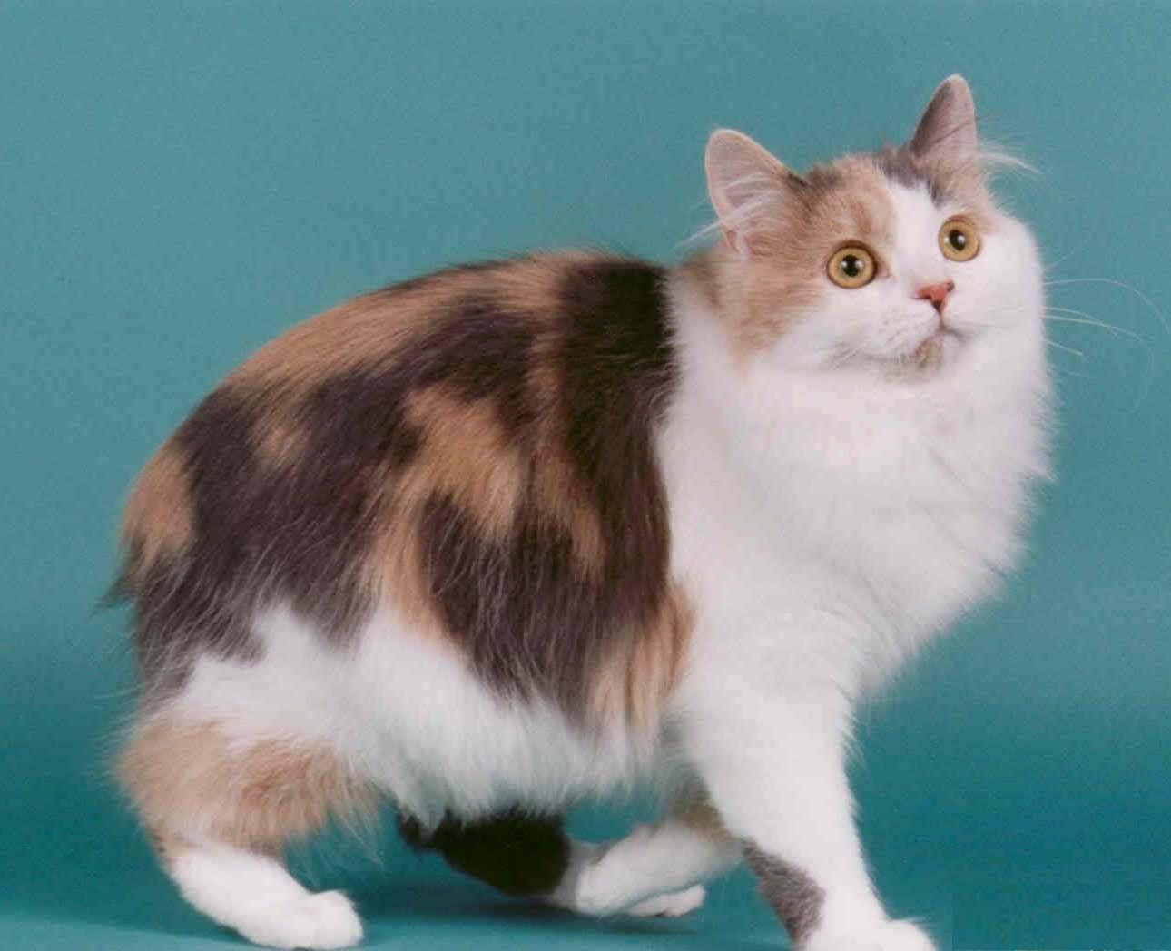 Породы кошек ребенка фото и названия