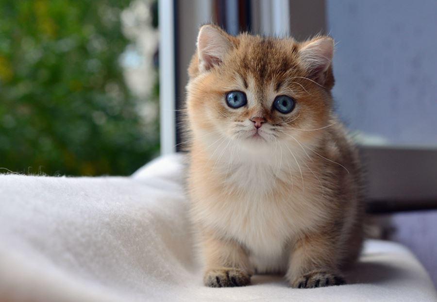 Клички британских кошек-девочек
