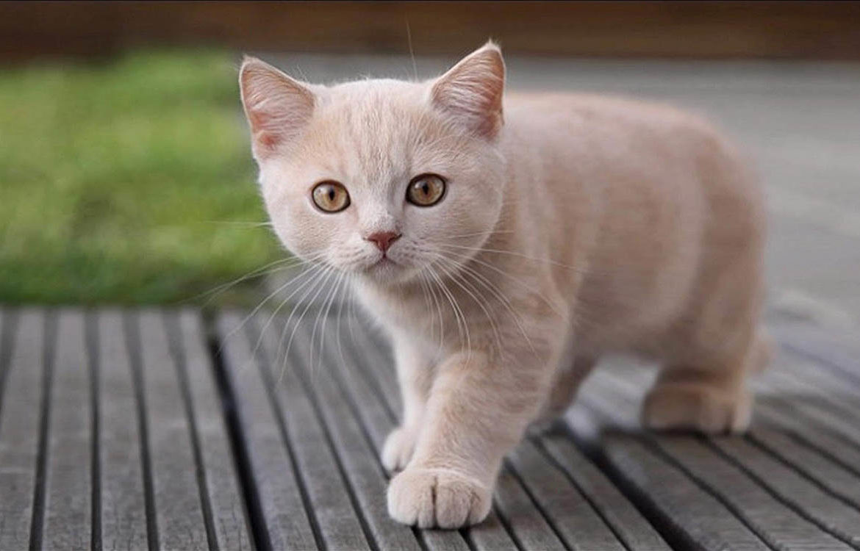 Имя коту мальчику на букву м