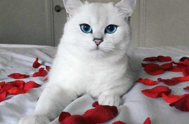 Кот Коби с самыми красивыми глазами: фото