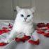 Коби — кот с самыми красивыми глазами: фото