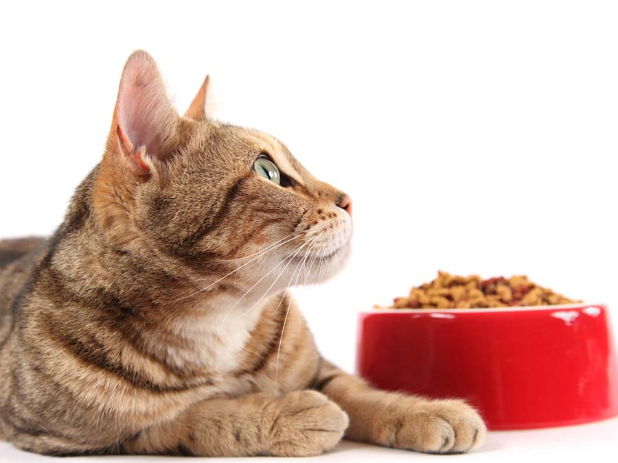 Можно ли котам есть свинину