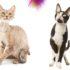 Девон-рекс и корниш-рекс: отличия кошек разных пород