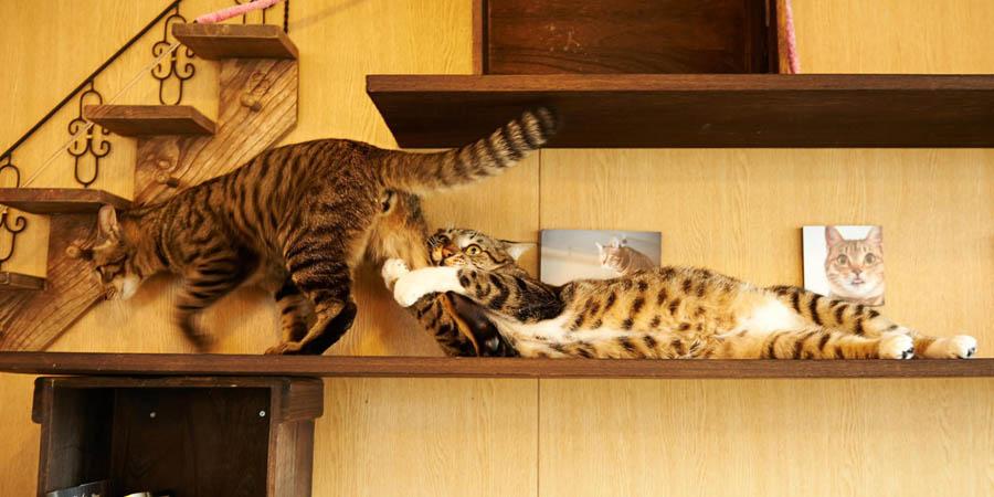 Кошачьи нежности: фото
