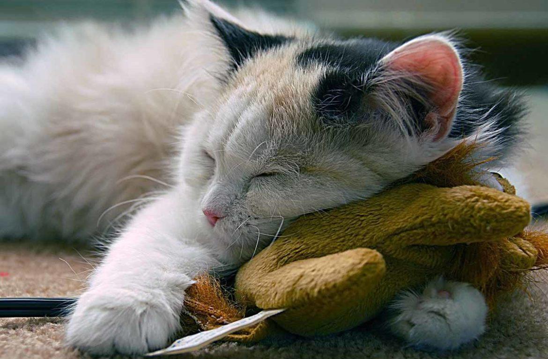 Кошачий рай: тайное видео из зоомагазина