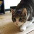 Видео: кошачий танец