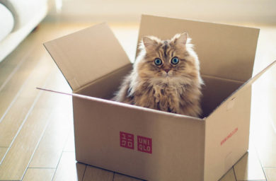 Кошачья логика: фото