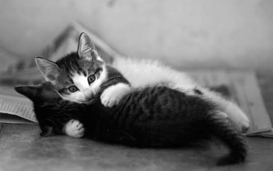 Кошачья нежность