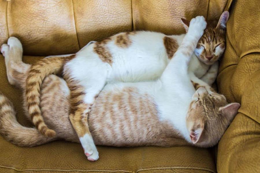 Кошачья нежность: фото