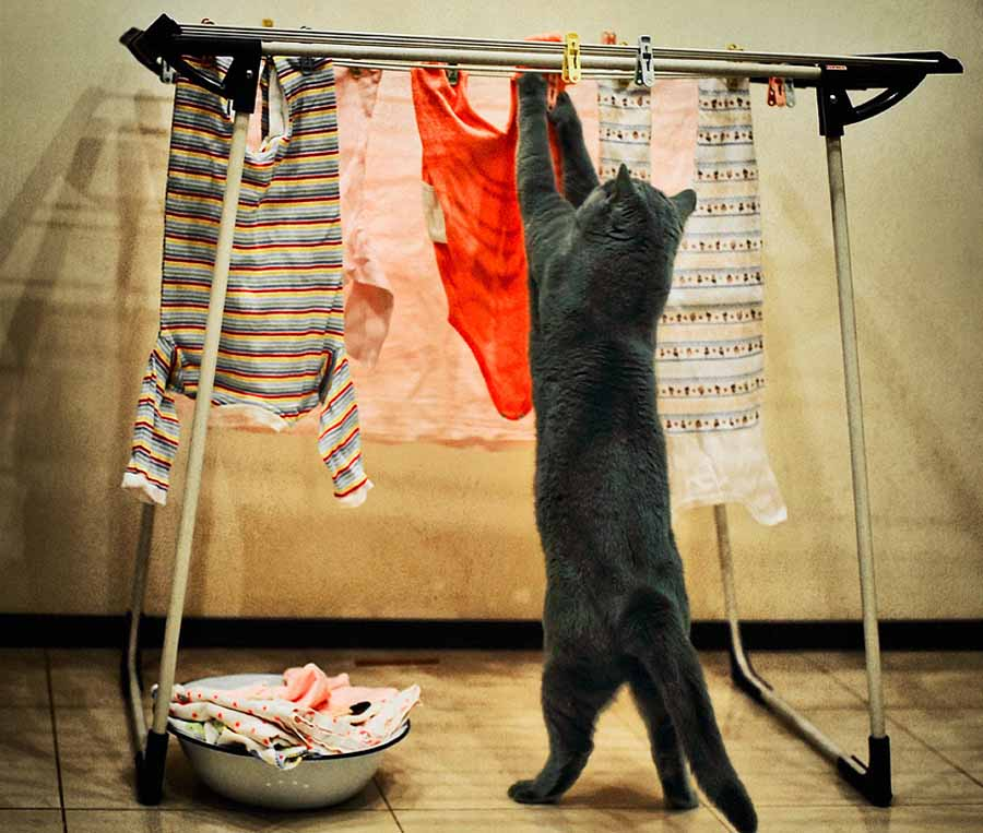 Кошка 8 марта: картинки
