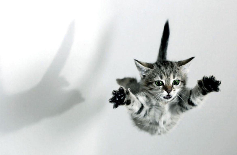 Почему кот боится прыгать