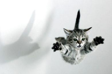 Кошка боится прыгать