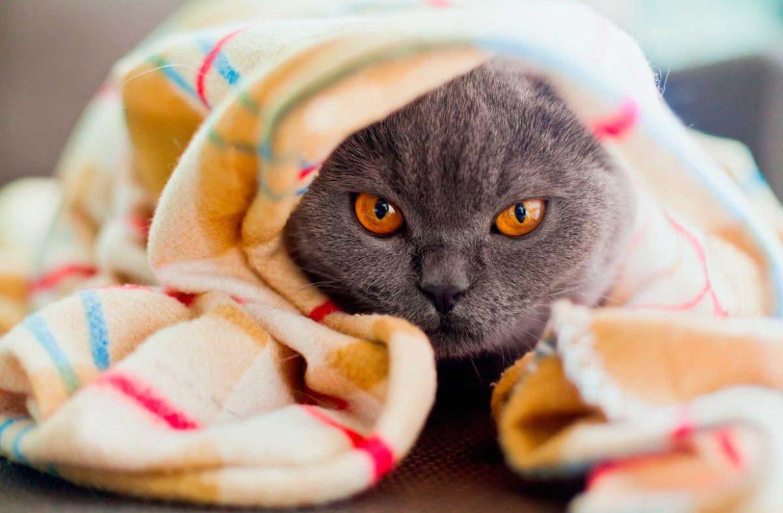 Что делать в домашних условиях, если кошка чихает?