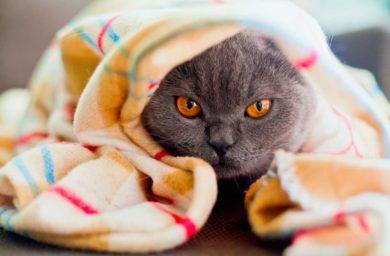 Кошка чихает чем лечить в домашних условиях