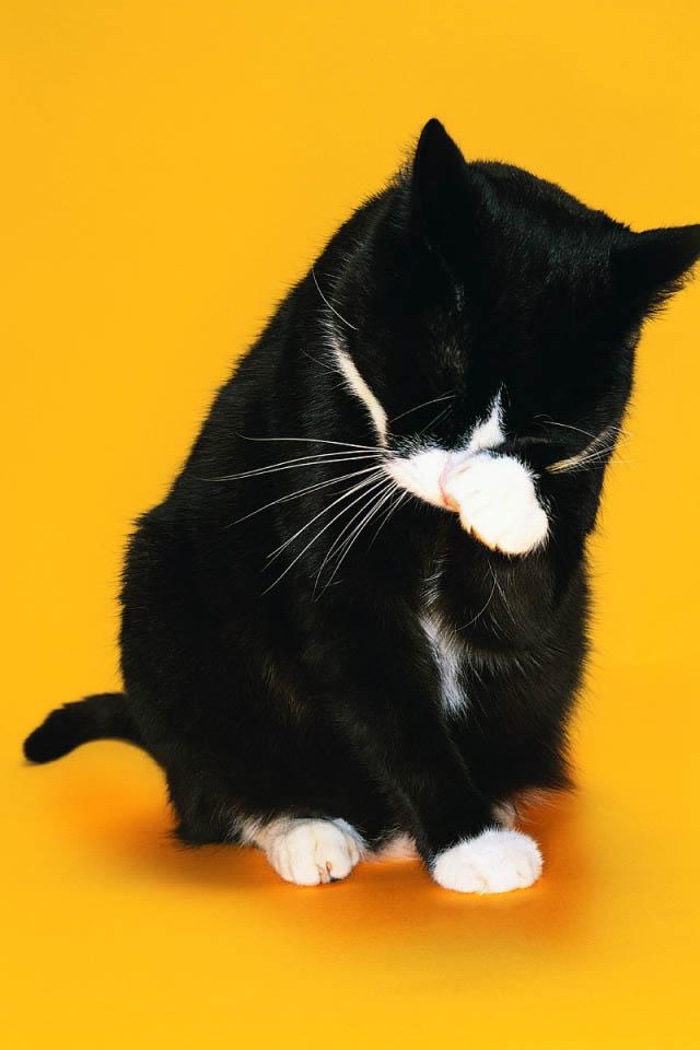 Кошка чихает, что делать в домашних условиях