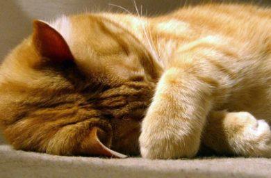 Кошка чихает после еды