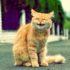 Если ваша кошка чихает
