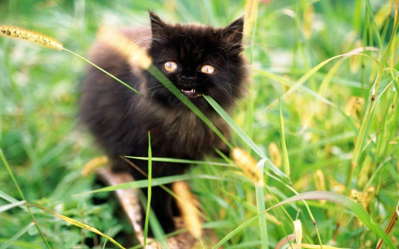 Причины почему кошка ест траву