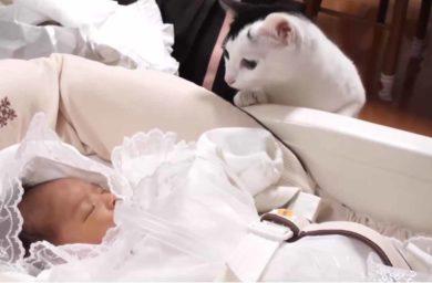 Младенец и кошка в доме — видео