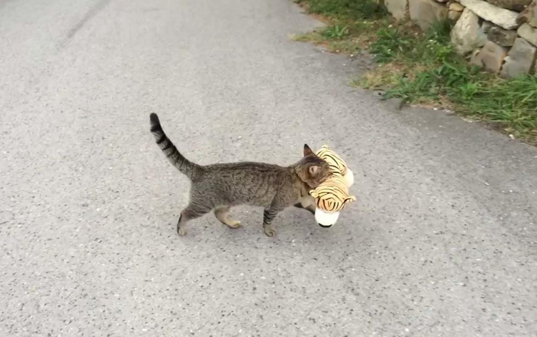 Каждый кот в душе тигр!