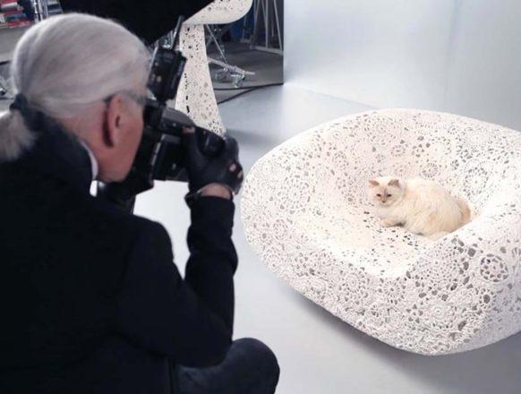 Фото кошки Карла Лагерфельда
