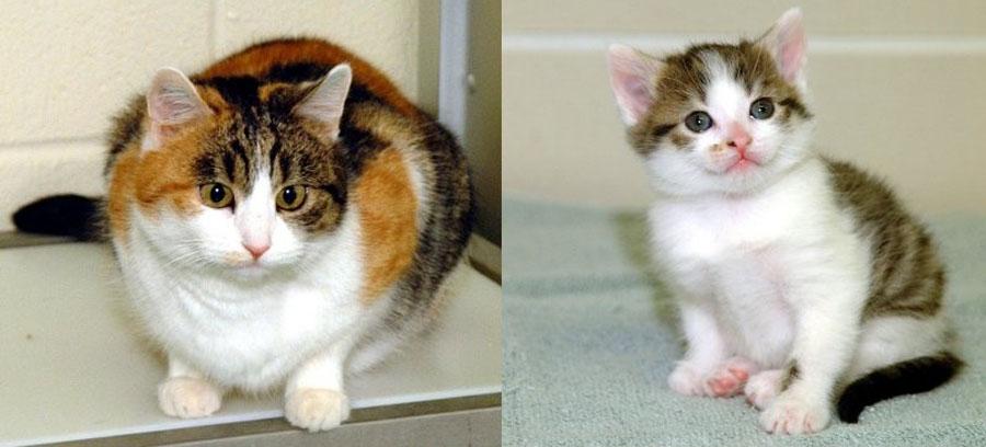 Кошка клон